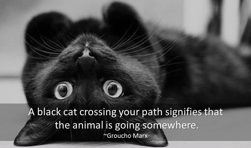 Cat Quotes – Cats Quotes – Famous Quotes & Quotations about Cats