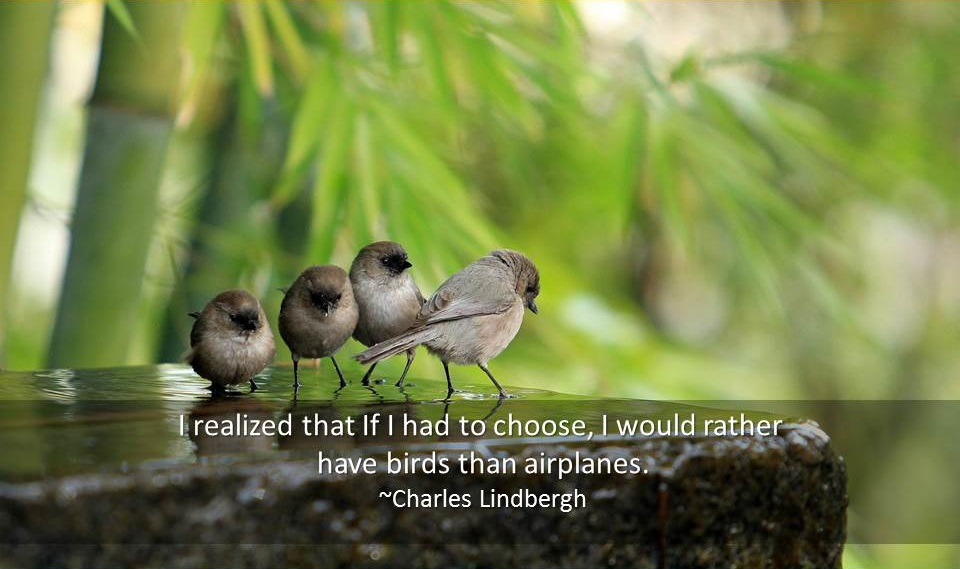 Quotations About Birds